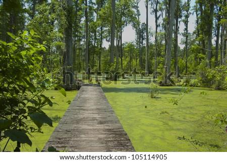 Cypress Gardens In South Carolina Stock Photo 105114905 Shutterstock