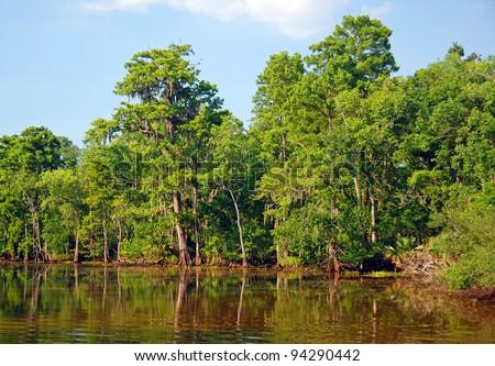 Cypress Marsh near New Orleans, Louisiana