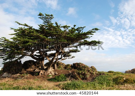 Cypress Pine Lookout at 17 Mile Drive, Monterey california