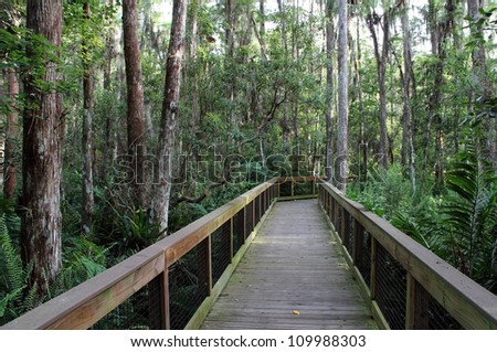 Cypress Swamp in the Everglades, Loxahatchee National Wildlife Refuge