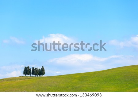 Cypress trees group and green field, rural landscape in Crete Senesi, Siena, Tuscany. Italy