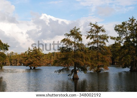 Cypress Trees in Lake Taken in Monroe, Louisiana
