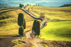 Cypress trees on the road to a farmhouse in the Tuscan landscape with blue sky in the background