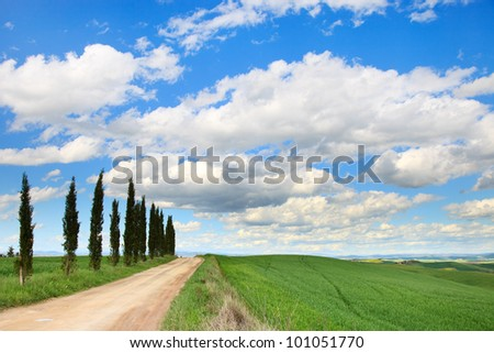 Cypress Trees row, a traditional white road, green field and blue cloudy sky. Rural landscape in Crete Senesi land near Siena, Tuscany, Italy, Europe. - stock photo