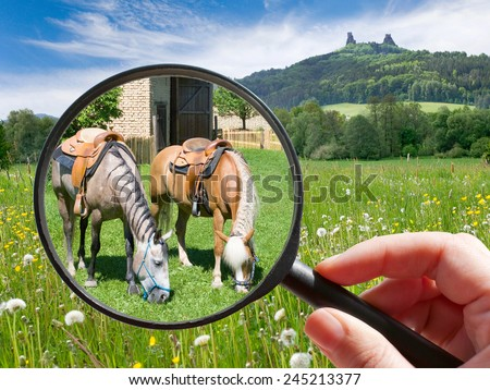 czech agriculture - green farm with animals - horse and horse riding