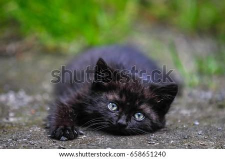 Czech Republic - June 2014: Black kitten #658651240