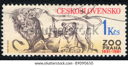 CZECHOSLOVAKIA - CIRCA 1981: A stamp printed in CZECHOSLOVAKIA shows  a Panthera leo, Zoo Prague 1931-1981, series, circa 1981