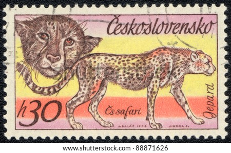 CZECHOSLOVAKIA - CIRCA 1976: A stamp printed in CZECHOSLOVAKIA  shows Cheetah, series, circa 1976