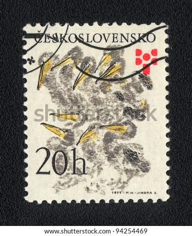 CZECHOSLOVAKIA - CIRCA 1975: A stamp printed in CZECHOSLOVAKIA shows Chicks, circa 1975