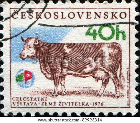 CZECHOSLOVAKIA - CIRCA 1976: A stamp printed in Czechoslovakia shows cow, circa 1976