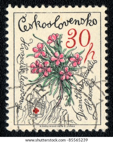 CZECHOSLOVAKIA - CIRCA 1979: A stamp printed in Czechoslovakia shows image of a   Dianthus glacialis, herb series, circa 1979