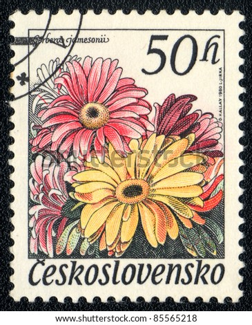 CZECHOSLOVAKIA - CIRCA 1980: A stamp printed in Czechoslovakia shows image of a gerbera jamesonii, series, circa 1980