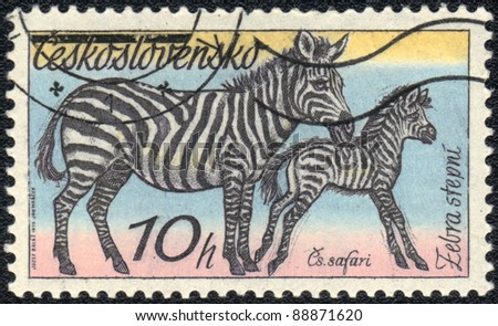 CZECHOSLOVAKIA - CIRCA 1976: A stamp printed in CZECHOSLOVAKIA  shows Plains Zebra, series, circa 1976