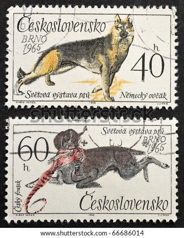 CZECHOSLOVAKIA - CIRCA 1965: two stamps printed in Czechoslovakia shows images of German Shepherd and Chesky Fousek, a typical Czech gun dog. Czechoslovakia, circa 1965