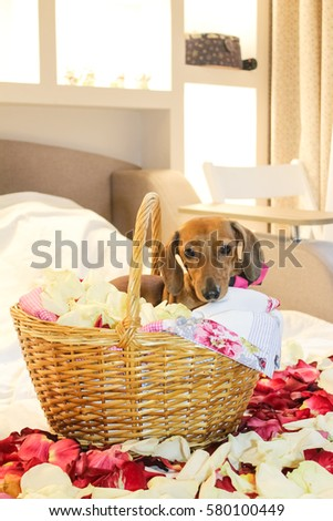 free photos happy birthday cute little puppy with birthday gifts