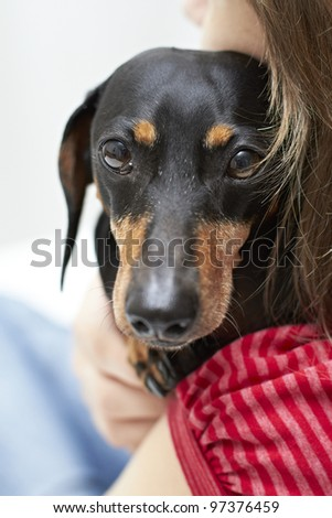 Dachshund dog looking over shoulder