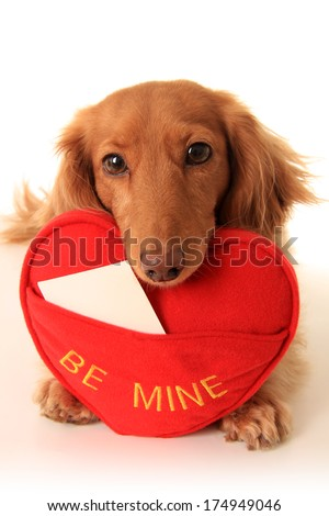 Dachshund puppy with a heart shaped pillow that says be mine. Add your own text. - stock photo