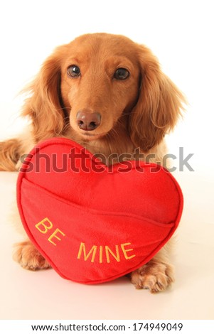 Dachshund puppy with a heart shaped pillow that says be mine. Add your own text.