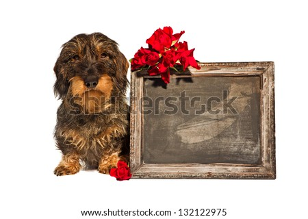 dachshund with undescribed chalkboard #132122975