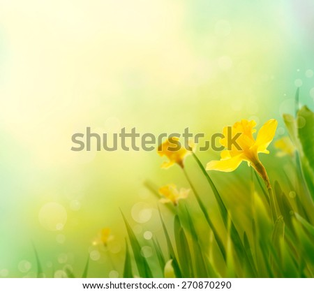 Daffodil floral spring background. Easter Spring Flowers. Elegant Mother\'s Day gift. Springtime green background.