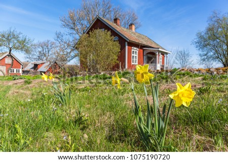 Daffodil flowers bloom in a garden at a farm in spring #1075190720