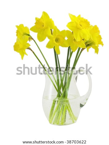 daffodil in a pitcher isolated on white