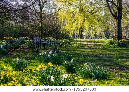 Daffodils flourish in Worden Park in Lancashire, England. Stockfoto ©