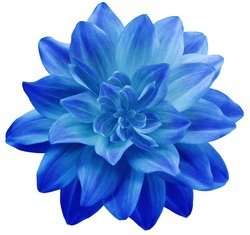 dahlia flower blue. Flower isolated on a white background. No shadows with clipping path. Close-up. Nature.