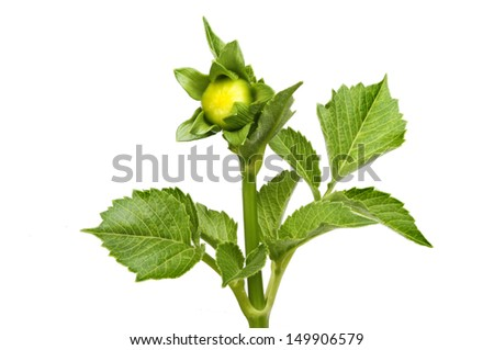 Royalty free coffee plant 21961432 stock photo for Olive garden blue springs missouri
