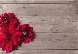 dahlia on wooden background