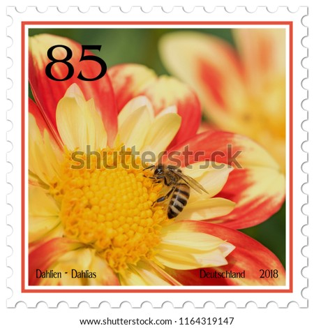 Dahlias on german postage stamp #1164319147