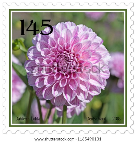 Dahlias on german postage stamp #1165490131