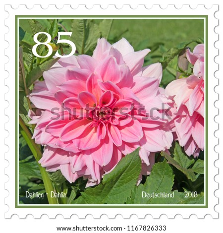 Dahlias on german postage stamp #1167826333