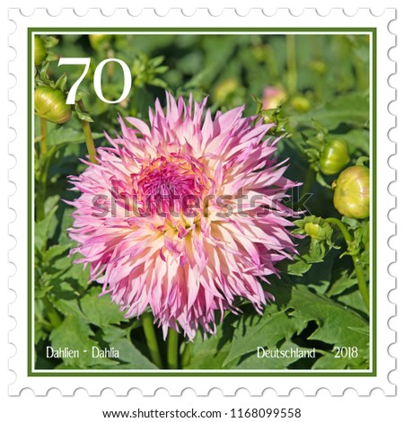 Dahlias on german postage stamp #1168099558