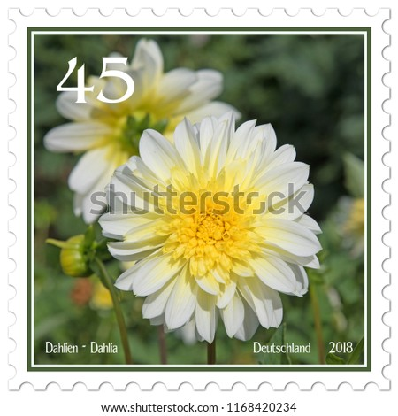 Dahlias on german postage stamp #1168420234