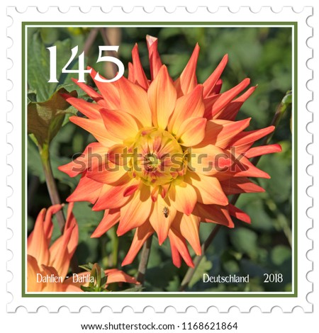 Dahlias on german postage stamp #1168621864