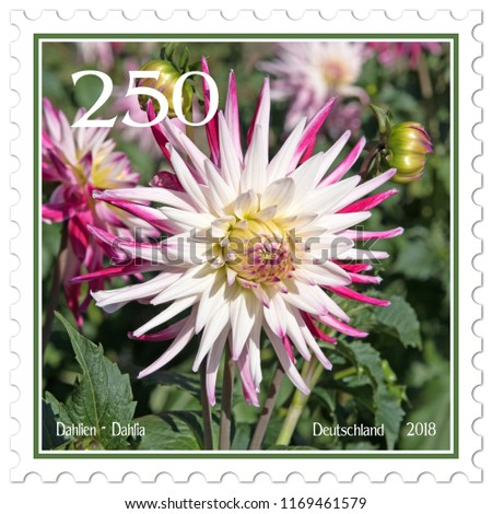Dahlias on german postage stamp #1169461579