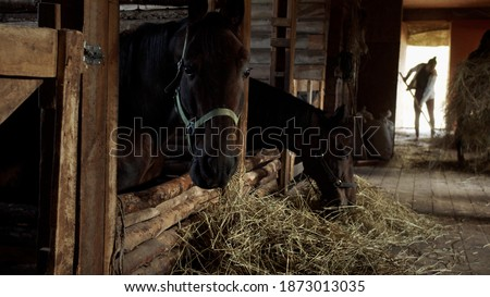 Daily life of stables employees who serve racehorses. Two grooms clean the stables and feed the horses. Photo stock ©