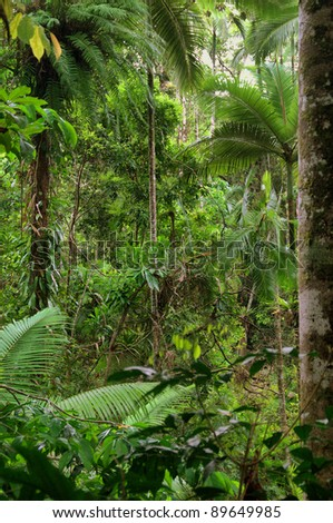Daintree National Park, Tropical Queensland, Australia #89649985