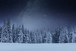 Dairy Star Trek in the winter woods. Dramatic and picturesque scene. In anticipation of the holiday. Carpathian Ukraine.