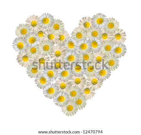 daisies forming a heart on white background