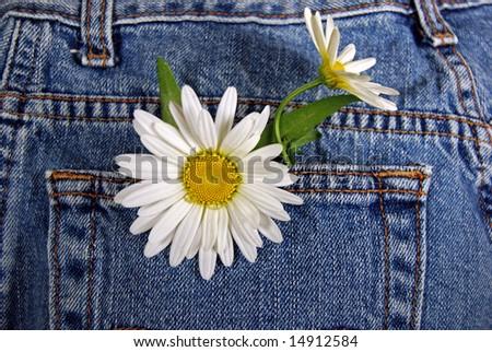 daisies in blue jean pocket