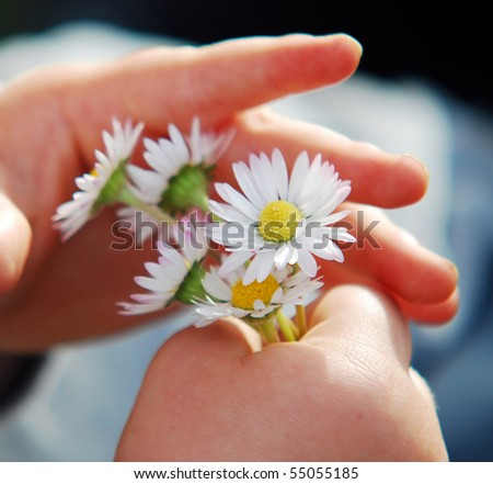 Daisies in child`s hand