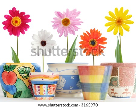 Daisies in fun ceramic pots