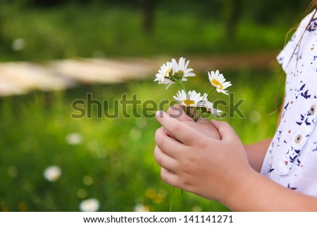 Daisies in hands of a child. Sunny spring background. Close up. Harmony concept #141141271