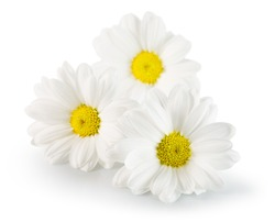 daisies isolated on the white background