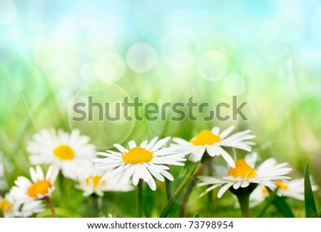 Daisies on spring background.
