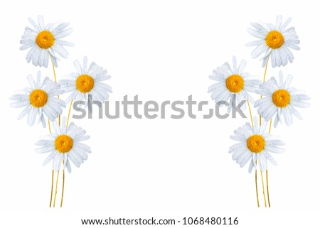 daisies summer white flower isolated on white background #1068480116