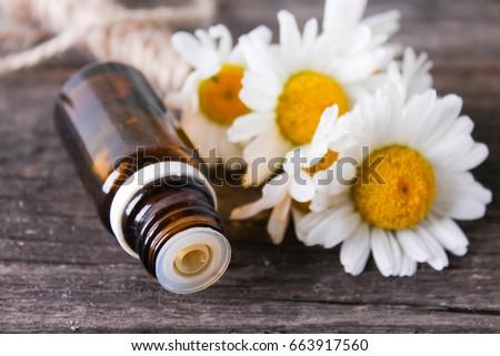 daisy,Chamomile essential oil