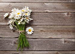 Daisy chamomile flowers on wooden background. View with copy space